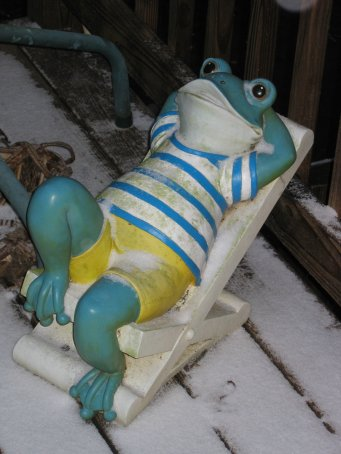Relaxing frog in snow